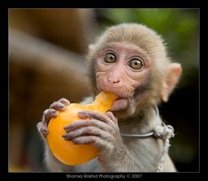 Baby_Monkey_eating_by_shamsa95