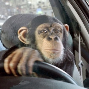 funny-monkey-is-driving-the-car-Copy