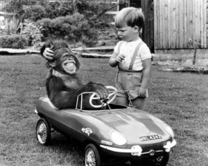 monkey-in-car