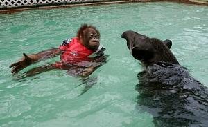 swimming_monkey_04