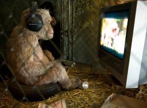 monkey-watching-tv