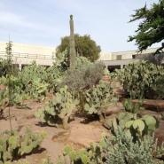 Cactus museum